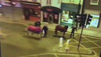 Barnet Horse video