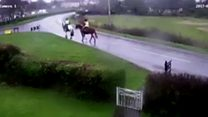 Moment car crashes into horses and riders
