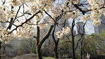 Ağaçlar havayı temizleyebiliyor mu?