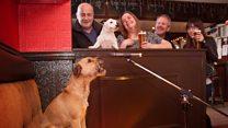 Meet Jake, the karaoke canine