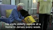 Jersey Dog nominated for Crufts award