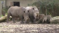 کشتن یک کرگدن به خاطر شاخش در باغ وحشی در فرانسه