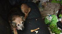 Alone dog survives 'orange-sized' tumour