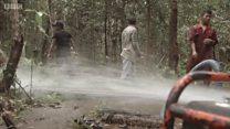 انڈونیشیا کا 'فائر پروف' جنگل