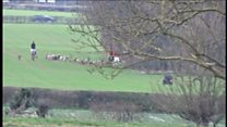 Footage of an illegal fox hunt