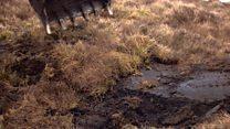 £8m boost to restore Scottish peatlands