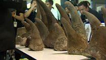 แกะรอยนอแรดเถื่อนจากเอธิโอเปียมาไทย มูลค่ากว่า 5 ล้านดอลลาร์