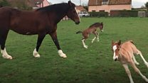 'Rare' birth of twin foals on farm