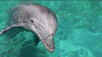 مرگ سیصد نهنگ در سواحل نیوزلند