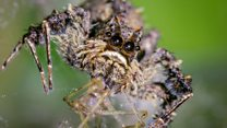 Hungry spiders eat up to 800m tonnes of insects a year!