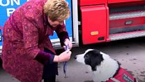 Cheshire Fire and Rescue dog awarded a special medal