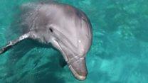Колишні бойові дельфіни допомагають вченим
