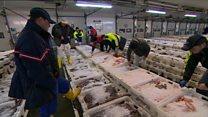 What is fishing industry angling for?