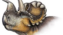 Paleo artist brings fossils to life