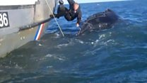 Whale rescue footage released