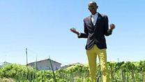 'It's miraculous' says SA's spinach king