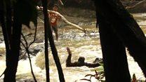 ช่วยชีวิตอุรังอุตังติดกลางแม่น้ำ