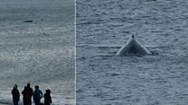 Whale freed after becoming stuck on lobster pots