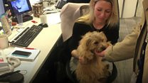Should you take your pet to work?