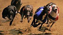 Last dog greyhound races at Wimbledon