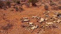 داغ خشکسالی بر تن میلیونها کوچ نشین در سومالی