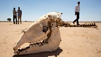 Somaliland'da kuraklık
