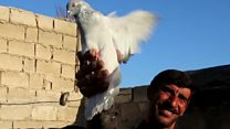 'I defied IS to keep my pigeons'