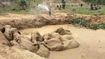 Giải cứu đàn voi