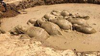 Elephants escape Cambodian mud hole