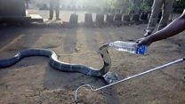 Nyoka apewa na kunywa maji kwa chupa India