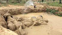 Как спасали утопающих слонов