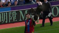 Fan 'could have killed' Crystal Palace bald eagle