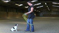 Dog breaks skipping world record