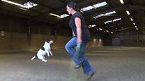 كلبة وصاحبتها يسجلان رقما قياسيا جديدا في القفز بالحبل