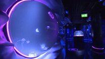 У Лондоні відкрили для показу тисячу медуз