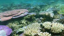 မဟာသန္တာကျောက်တန်းကြီး ပျက်စီးမှု များလာ