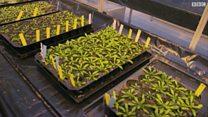 باحثة تعمل على زيادة تحمّل النبات للأملاح