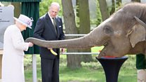 Elephant Donna goes bananas for Queen