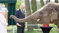 Queen feeds banana to elephant