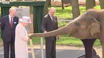 Королева Елизавета II покормила слона бананами