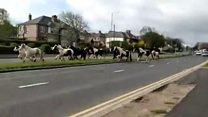 Horses run loose in Bradford