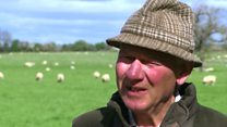 Edmund Strainge's sheep have been attacked six times by dogs in the past seven years..