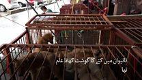 تائیوان میں کتے اور بلیاں کھانے پر پابندی