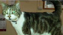 Should Tewkesbury council evict Missy the moggy?