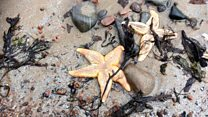 Thousands of starfish wash up on beach