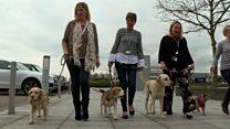 شركات بريطانية ترحب بإحضار موظفيها كلابهم