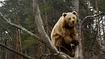 Rescued bears settle in to new life