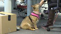 Британцы все чаще ходят на работу со своими собаками