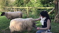 Young farmer wants to make a crooked necked sheep sanctuary