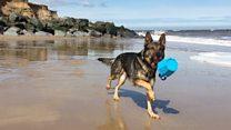 'Hero' ex-police dog Finn makes a splash